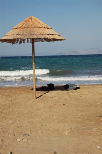 Dog days, Rafina
