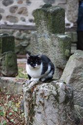 Cat on tombstone, Boyana Church: by vagabonds, Views[401]