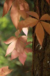 Fall colors: by vagabonds, Views[386]