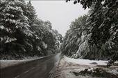 October snow storm: by vagabonds, Views[1234]