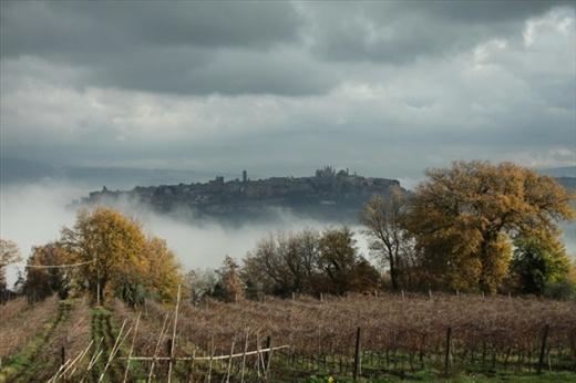 Orvieto and vineyard