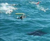 Racing to catch the mantas, Ningaloo Reef: by vagabonds, Views[479]