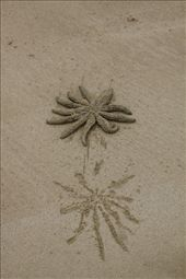 Impression and sea star, Bakers Beach, Narawntapu NP: by vagabonds, Views[452]
