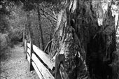 Trail to Platypus Cove, Lake St. Clair NP: by vagabonds, Views[484]