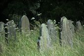 Overgrown dead people: by vagabonds, Views[540]