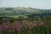 Picture book fields: by vagabonds, Views[215]