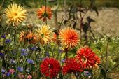Garden flowers, Sissinghurst Castle: by vagabonds, Views[613]
