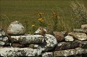 Stone wall, Oland Island WHS: by vagabonds, Views[639]