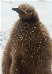 Chubby chicks weigh more than their folks: by vagabonds, Views[373]