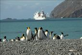 King penguins and the Vavilov: by vagabonds, Views[306]