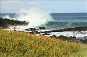Easter Island: by vagabonds, Views[819]