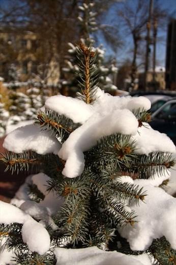 Bishkek snow — again!