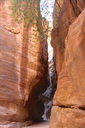 Walking through the siq, Petra: by vagabonds3, Views[62]