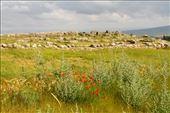 Hattusa ruins: by vagabonds3, Views[25]