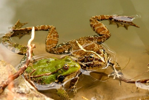Frogs do it... Ihlara