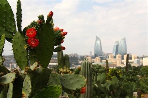 Cactus garden, Baku
