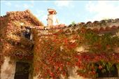 Fall colors, Eze: by vagabonds3, Views[49]