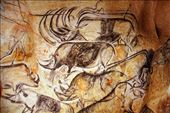 Rhinos in perspective, circa 34,000 BC, Caverne Pont d'Arc: by vagabonds3, Views[81]