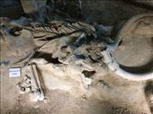 Waco Mammoth Site: by vagabonds3, Views[160]
