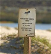 Snowy plover breeding area, Rancho Guadalupe Dunes : by vagabonds3, Views[25]
