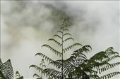 Ferns in the clouds: by vagabonds3, Views[212]