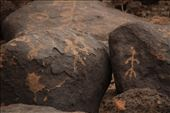 Painted Rocks Petroglyph Site: by vagabonds3, Views[57]