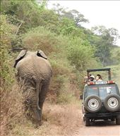 Size does matter, Serengeti: by vagabonds3, Views[20]