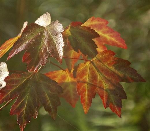 Fall colors, Corkscrew NWR