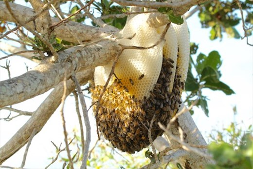 Honeycomb, Tigertail Beach, Marco Island