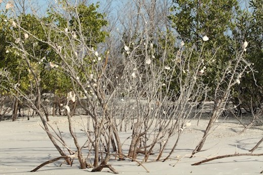 Marco Island Christmas tree