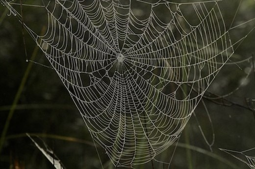 Misted web, JW Corbett NWR