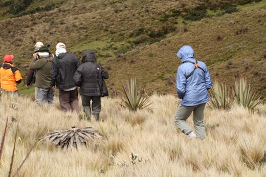 On the trail of the Blue-throated Hillstar, Cerro Arcos