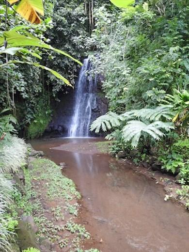Botanic Garden, Papeete