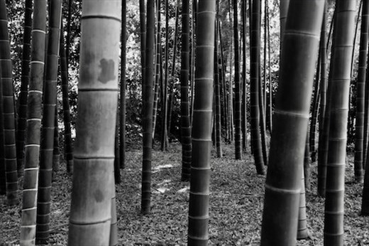 Bamboo Forest, Imperial Palace Garden