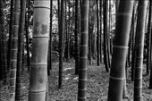 Bamboo Forest, Imperial Palace Garden: by vagabonds3, Views[21]