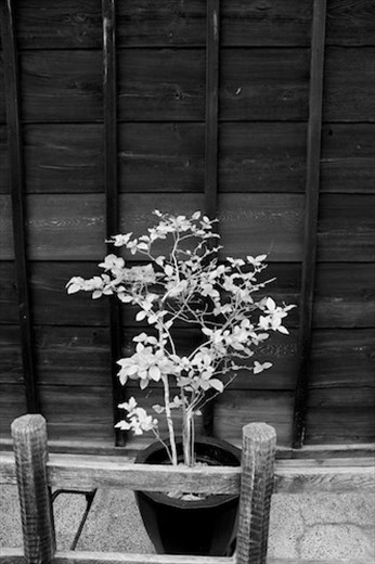 Simplicity in Black and White, Takayama