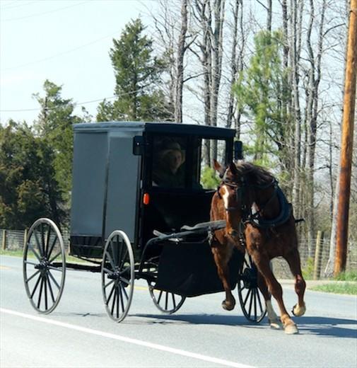 Amish stampede, Maryland