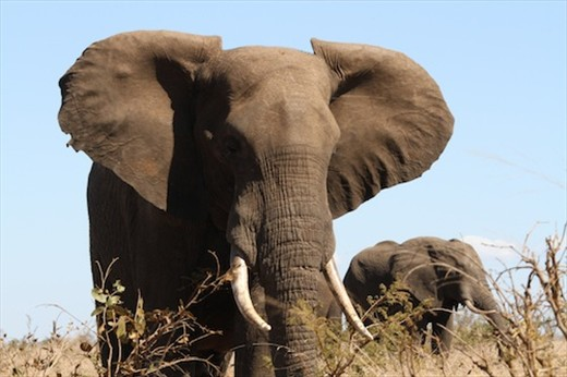 Close encounters of the elephant kind, Kruger National Park