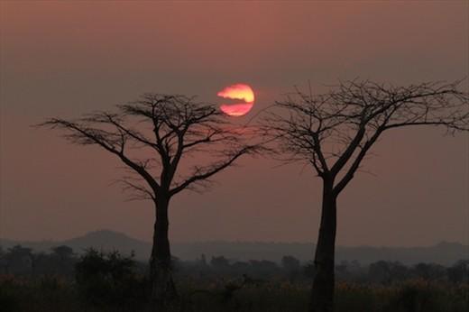 Sunset and baobabs, Bushman's Baobab Camp, Liwonde NP