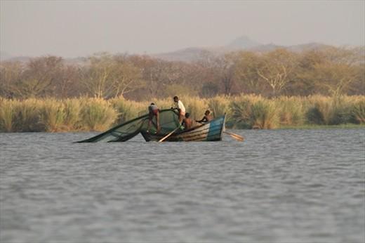 Wholesale fish poaching, Liwonde NP