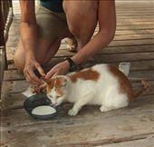 Wonder who's feeding him now: by vagabondstoo, Views[193]