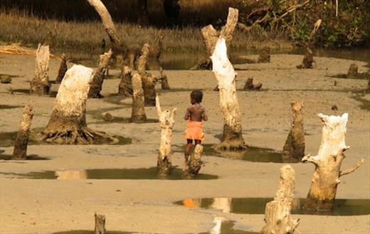 Dead mangroves, Ifaty