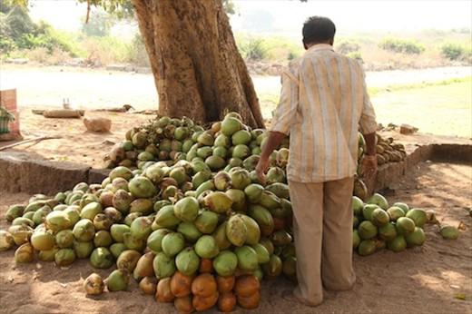 Coconuts, Hampi