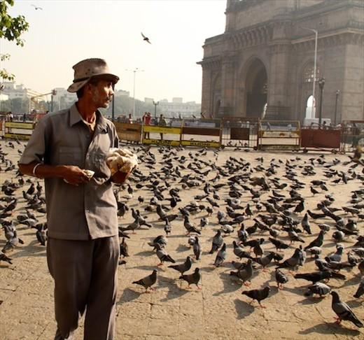 Pigeon Guy, Mumbai
