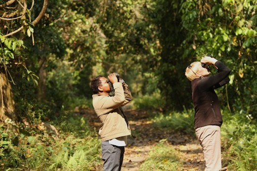 Martin and Connie scan the trees, Manas National Park, Assam
