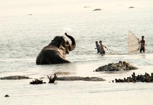 Fishing for elephants?  Manas National Park, Assam