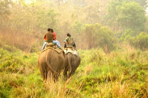Elephant safari, Manas National Park, Assam