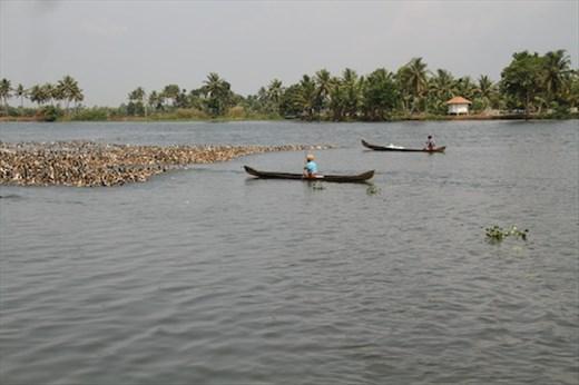 Herding ducks, Kerala Backwaters