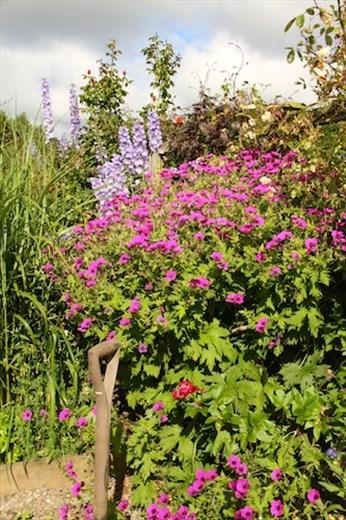 Garden at Lillikoi B&B