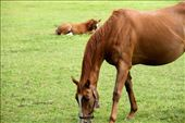 Mare and foal, Irish National Stud Farm: by vagabondstoo, Views[75]
